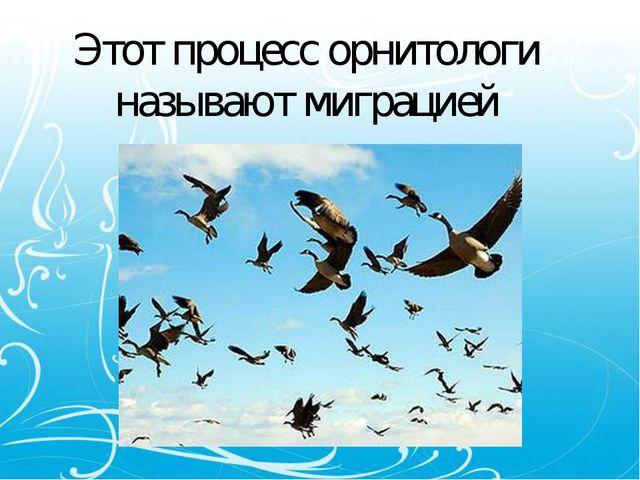 Этот процесс орнитологи называют миграцией