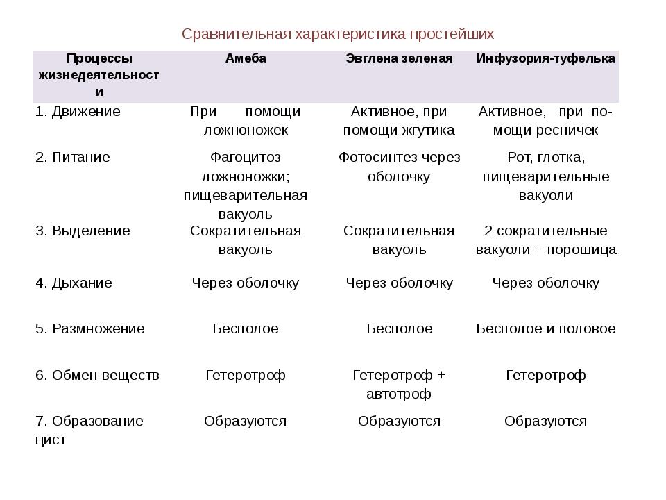 точки, сравнительная таблица простейших фото значение эти рекомендации