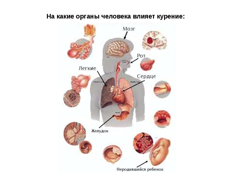 На какие органы человека влияет курение: