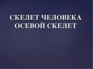 СКЕЛЕТ ЧЕЛОВЕКА ОСЕВОЙ СКЕЛЕТ