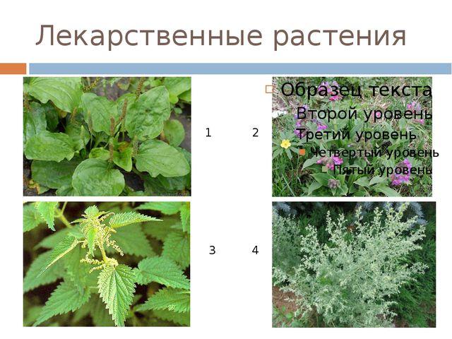 Лекарственные растения 1 2 3 4