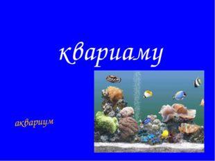 квариаму аквариум