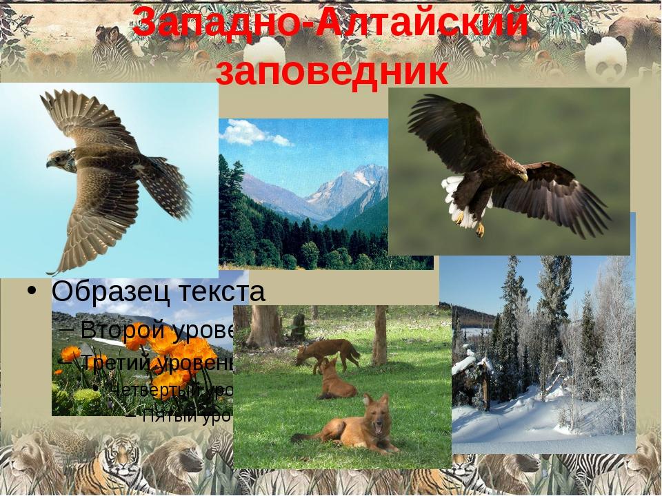Западно-Алтайский заповедник