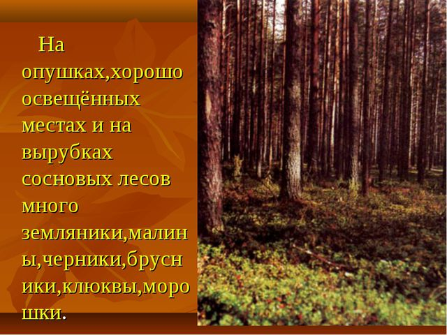 На опушках,хорошо освещённых местах и на вырубках сосновых лесов много земля...