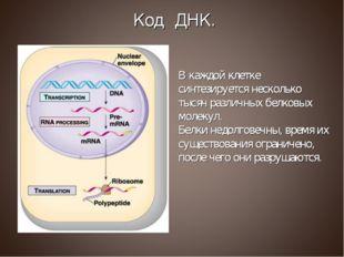 В каждой клетке синтезируется несколько тысяч различных белковых молекул. Бел