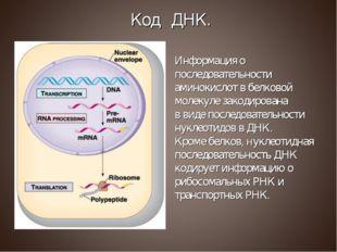 Информация о последовательности аминокислот в белковой молекуле закодирована
