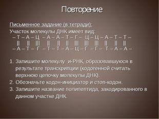 Повторение Письменное задание (в тетради): Участок молекулы ДНК имеет вид: –
