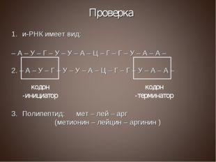 Проверка и-РНК имеет вид: – А – У – Г – У – У – А – Ц – Г – Г – У – А – А – 2