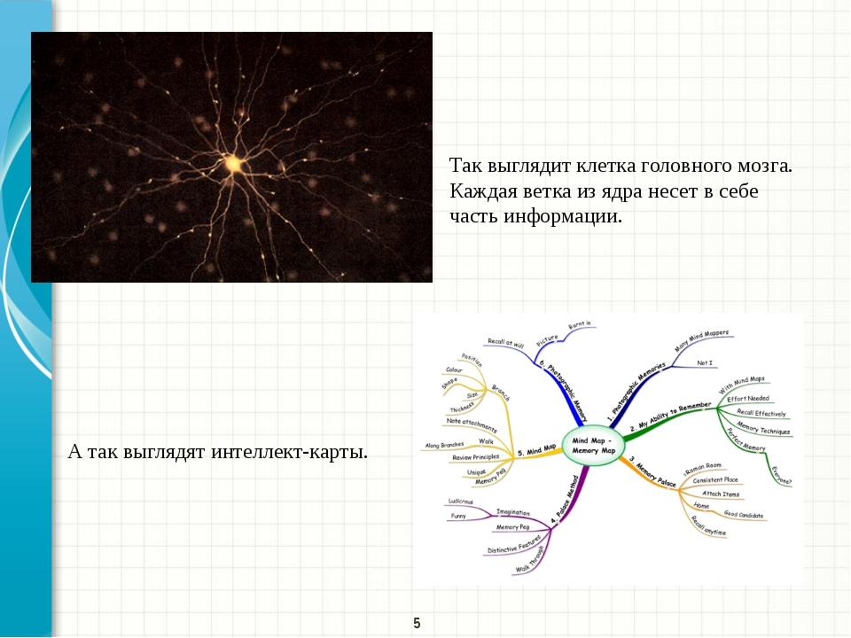 Так выглядит клетка головного мозга. Каждая ветка из ядра несет в себе часть...