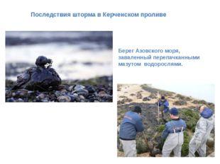 Последствия шторма в Керченском проливе Берег Азовского моря, заваленный пере