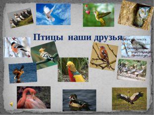 Птицы наши друзья