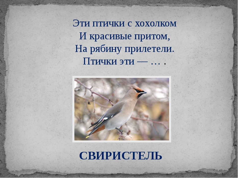 СВИРИСТЕЛЬ Эти птички с хохолком И красивые притом, На рябину прилетели. Птич...