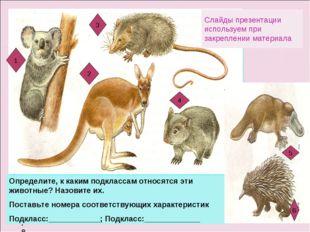 Определите Определите, к каким подклассам относятся эти животные? Назовите их