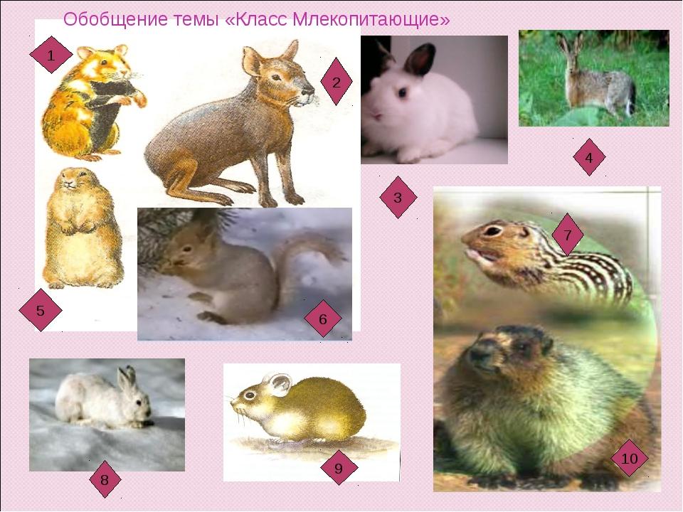 1 5 6 2 3 4 7 10 9 7 8 6 Обобщение темы «Класс Млекопитающие»