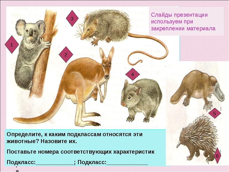Определите Определите, к каким подклассам относятся эти животные? Назовите их...
