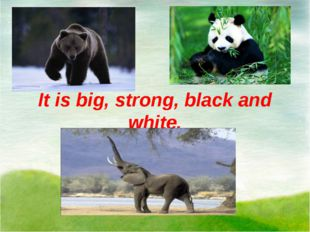 It is big, strong, black and white.