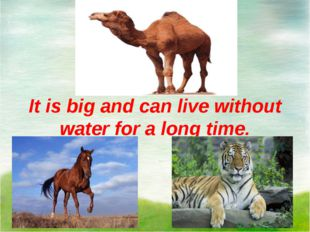 It is big and can live without water for a long time.