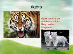 tigers Tigers are orange With black stripes. They сan be dangerous, They can