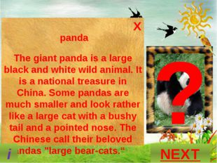 ? What is this animal? GUESS? P A N D A NEXT i X panda The giant panda is a l