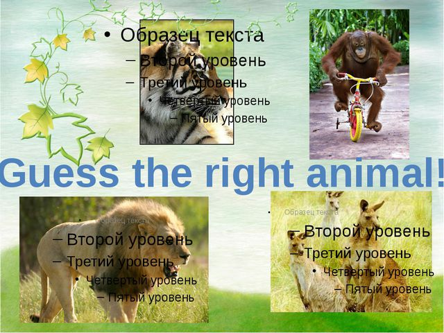 Guess the right animal!