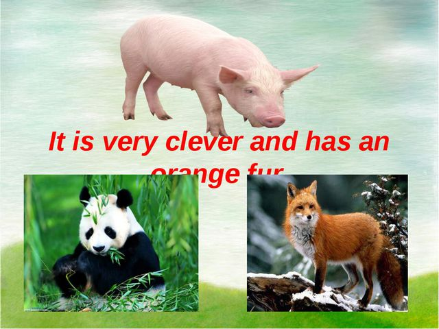 It is very clever and has an orange fur.