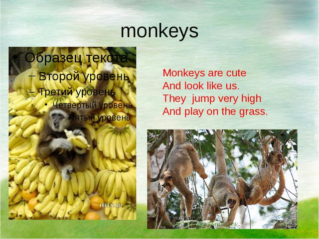 monkeys Monkeys are cute And look like us. They jump very high And play on th...