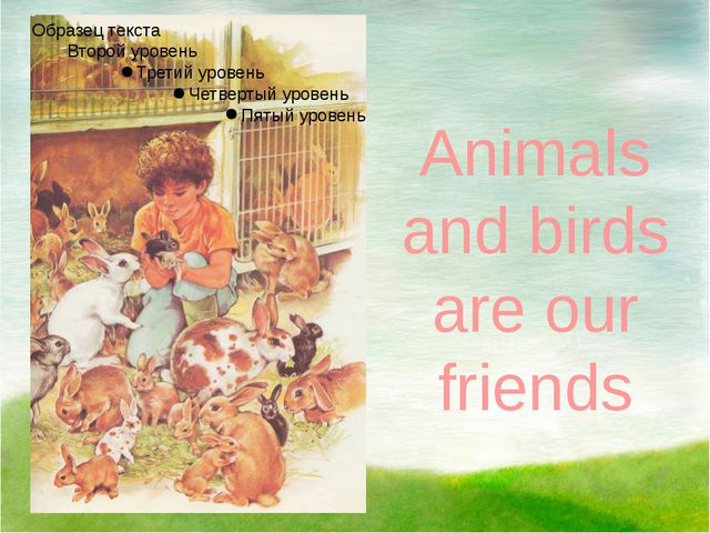 Animals and birds are our friends