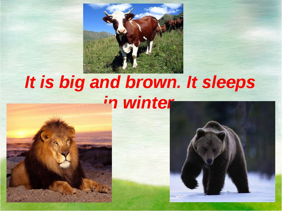 It is big and brown. It sleeps in winter.