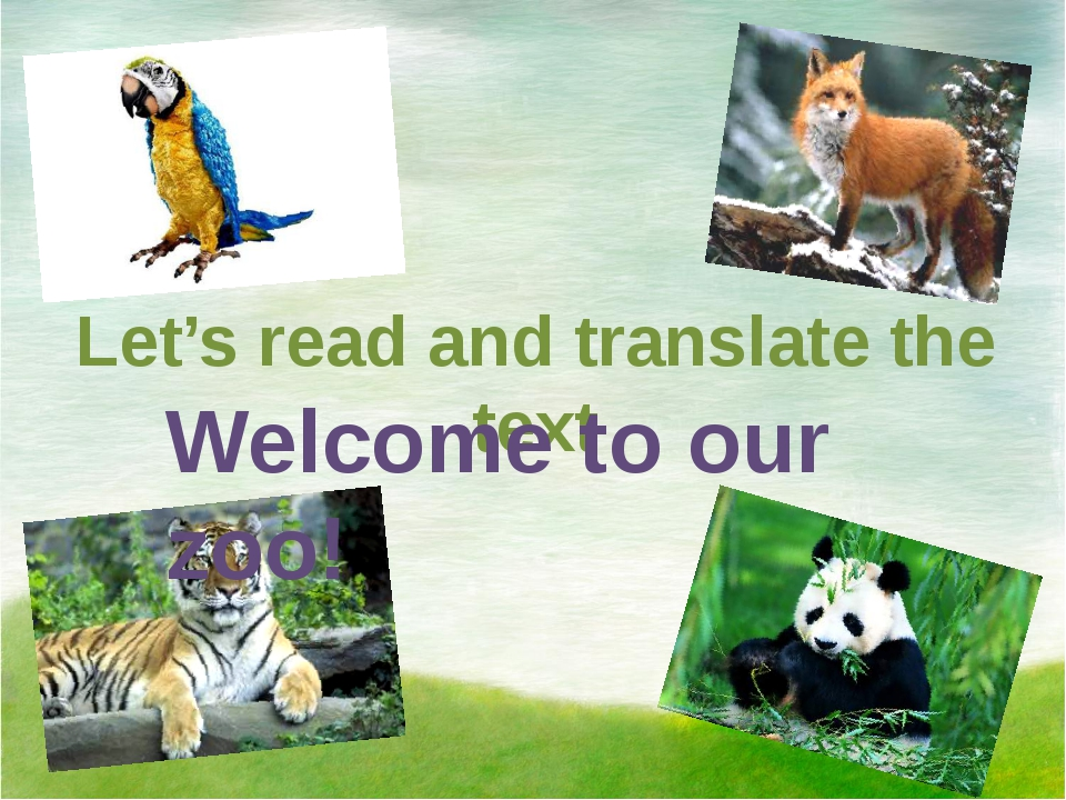 Let's read and translate the text Welcome to our zoo!