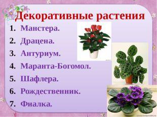 Декоративные растения Манстера. Драцена. Антуриум. Маранта-Богомол. Шафлера.