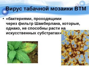 Вирус табачной мозаики ВТМ «бактериями, проходящими черезфильтр Шамберлана,