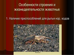 Особенности строения и жизнедеятельности животных 1. Наличие приспособлений д