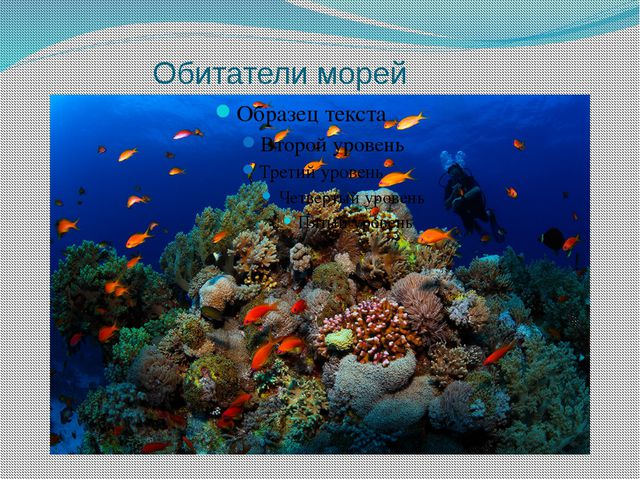 Обитатели морей