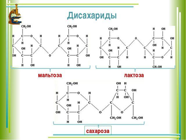 мальтоза лактоза сахароза Дисахариды