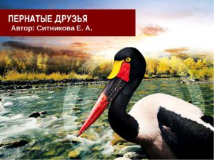 ПЕРНАТЫЕ ДРУЗЬЯ Автор: Ситникова Е. А.