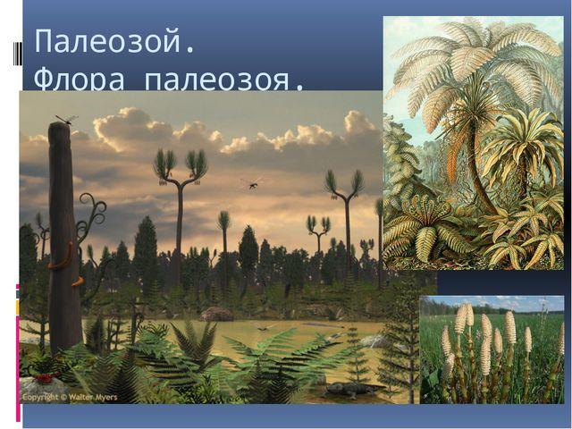Палеозой. Флора палеозоя.