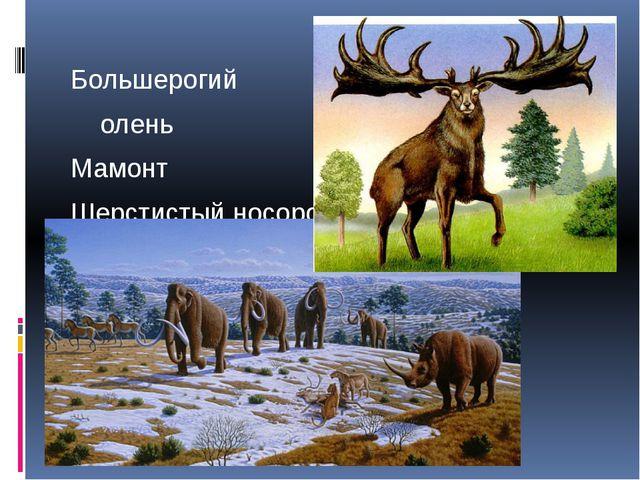 Большерогий олень Мамонт Шерстистый носорог