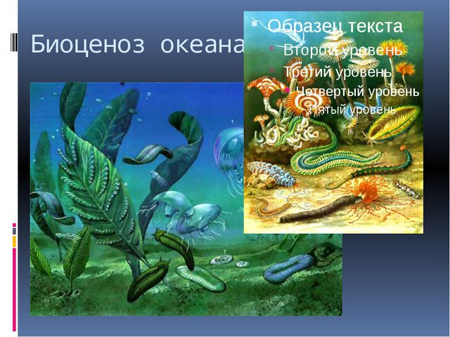 Биоценоз океана.