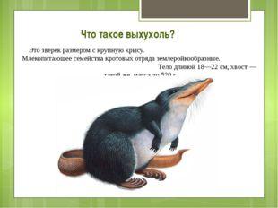 Что такое выхухоль? Это зверек размером с крупную крысу. Млекопитающее семейс