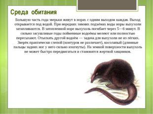 Среда обитания Большую часть года зверьки живут в норах с одним выходом кажда