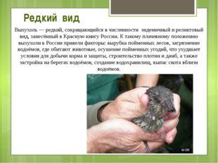Выхухоль— редкий, сокращающийся в численности эндемичный и реликтовый вид, з