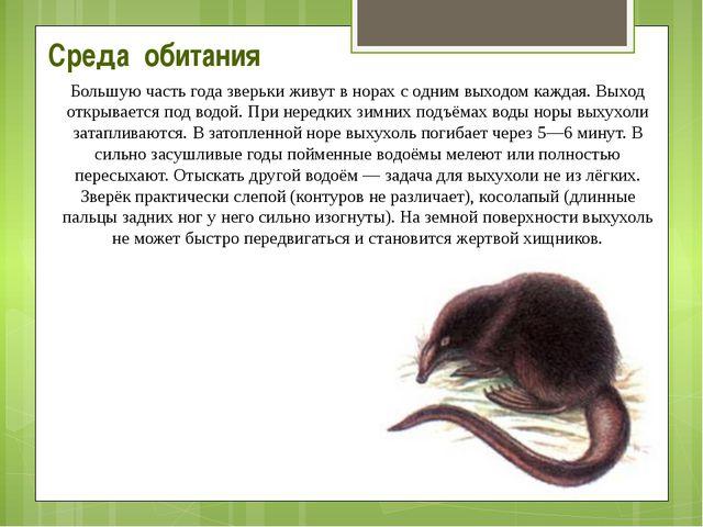 Среда обитания Большую часть года зверьки живут в норах с одним выходом кажда...