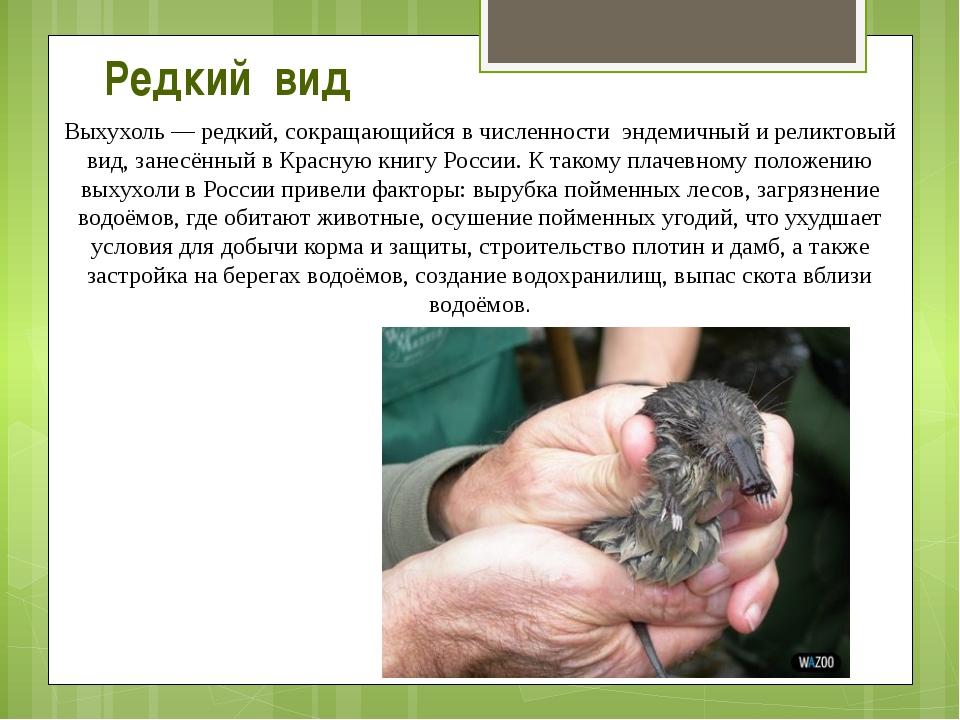 Выхухоль— редкий, сокращающийся в численности эндемичный и реликтовый вид, з...