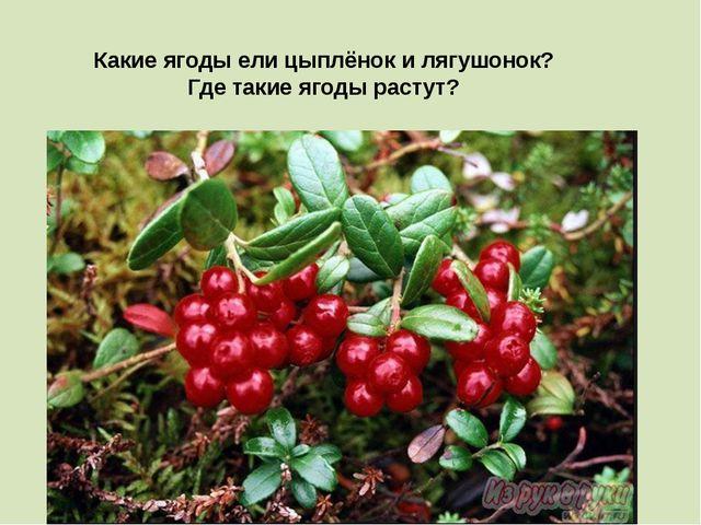 Какие ягоды ели цыплёнок и лягушонок? Где такие ягоды растут?