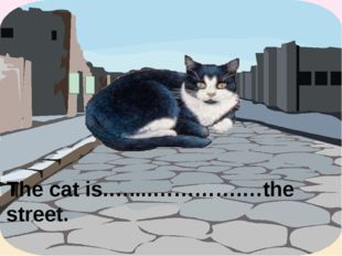 The cat is.…....………….…the street. in the middle of