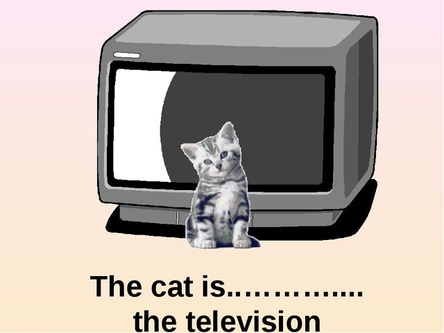 in front of The cat is..……….... the television