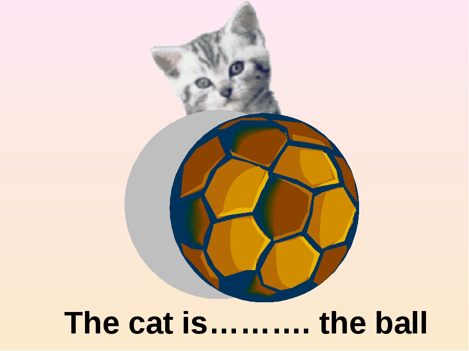 behind The cat is………. the ball