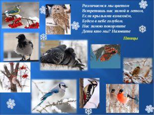 Различаемся мы цветом Встретишь нас зимой и летом, Если крыльями взмахнём, Бу