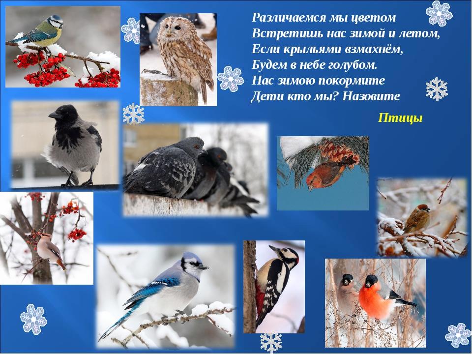 Различаемся мы цветом Встретишь нас зимой и летом, Если крыльями взмахнём, Бу...