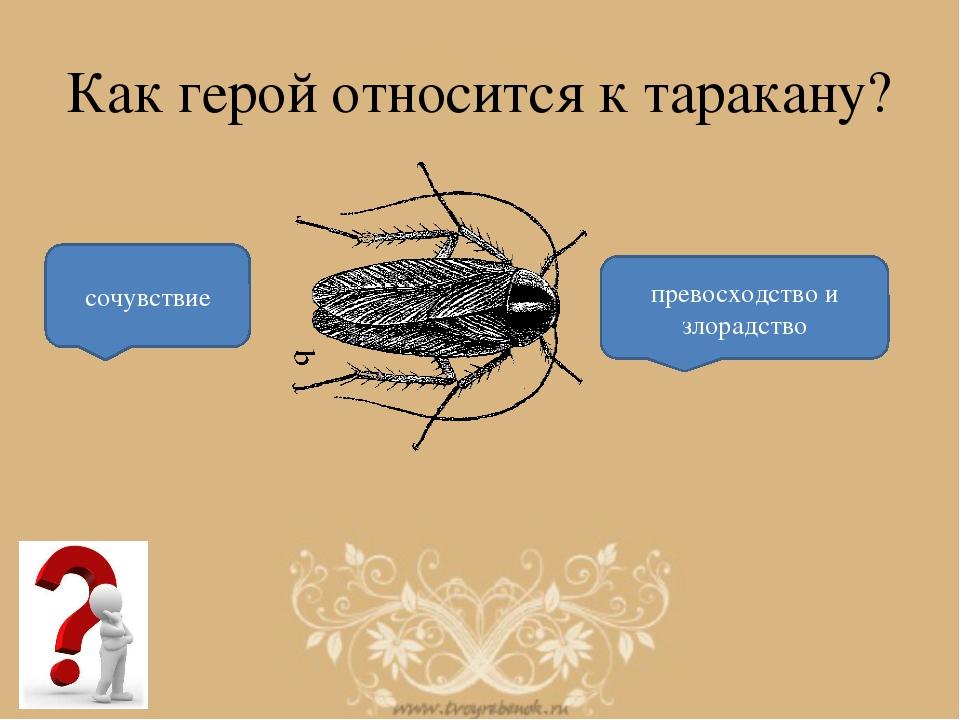Как герой относится к таракану? сочувствие превосходство и злорадство